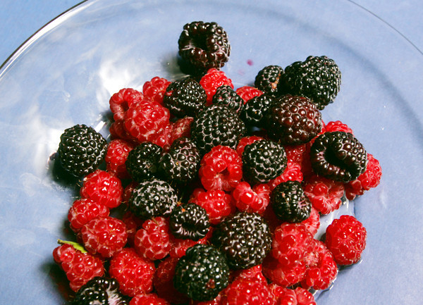 Globe/Roger Nomer<br /> Black and red raspberries