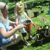 Globe/Roger Nomer<br /> Sharon Boatwright helps her granddaughter Annie Linder, 2, pick out a sunflower at the Carl Junction Cultivators Annual Plant Sale in Memorial Park in Carl Junction on Saturday.  The Cultivators were raising money for their projects around town including the entry garden off of Highway 171 and pots on Main Street.