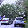 BLOCKED ROAD: This tree fell across CR 300 South from strong winds just west of Perry Worth Elementary School on Thursday.