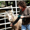 Veteran Chrystal Martin leads Fearless around the pen at Medicine Horse Program in Boulder, Colorado May 16, 2011.  Medicine Horse Program partnered with the Veterans Peace of Mind Project to create Fearless Victory, a program that mixes Veterans suffering from Post Traumatic Stress Disorder (PTSD) with wild horses in a mindful meditation program. CAMERA/Mark Leffingwell