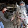 Veteran's Chrystal Martin (left) and Deni Darby (right) brush Fearless at Medicine Horse Program in Boulder, Colorado May 16, 2011.  Medicine Horse Program partnered with the Veterans Peace of Mind Project to create Fearless Victory, a program that mixes Veterans suffering from Post Traumatic Stress Disorder (PTSD) with wild horses in a mindful meditation program. CAMERA/Mark Leffingwell