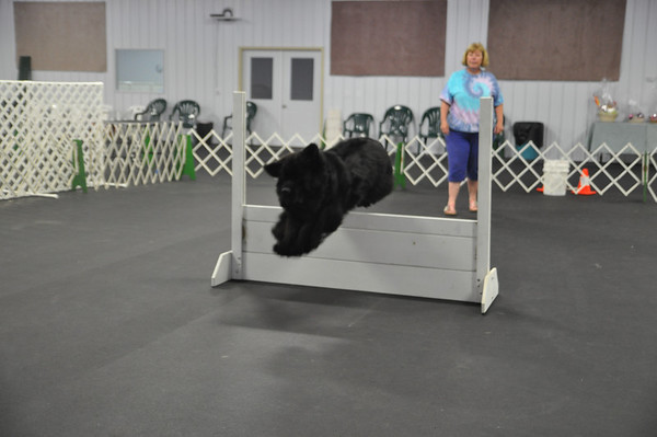 Medina Kennel Club moves into new location