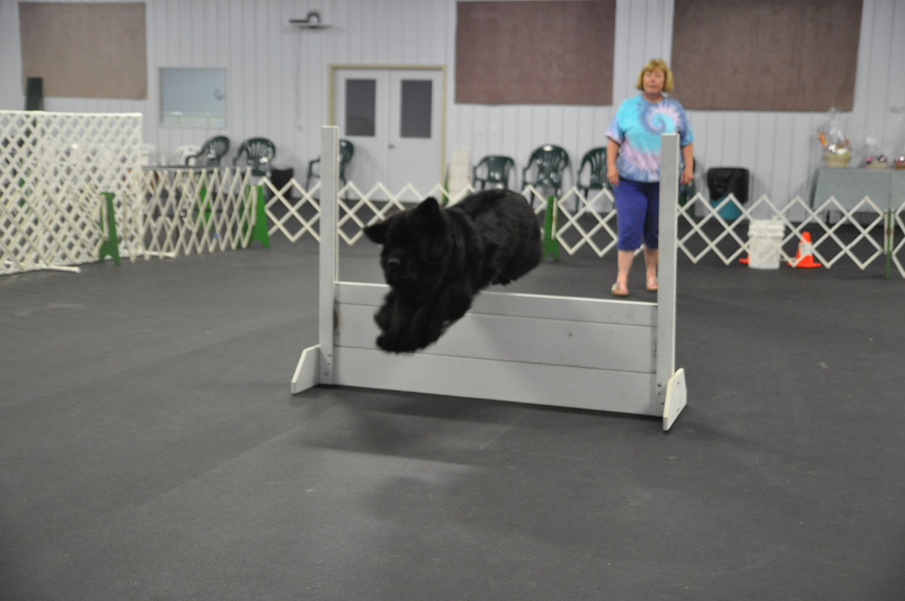 ASHLEY FOX / GAZETTE Clicquot, a 2-and-a-half year old Newfoundland, jumps during training with her owner, Kathy Sutliff of Valley City. Sutliff is a volunteer and teaches puppy classes at the Medina Kennel Club at 6840 Lake Rd.