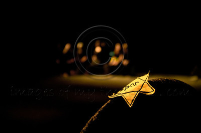 A yellow Star of David which served the Nazis  to mark Jews during the Holocaust era. Jerusalem, Israel. 07/09/2011.