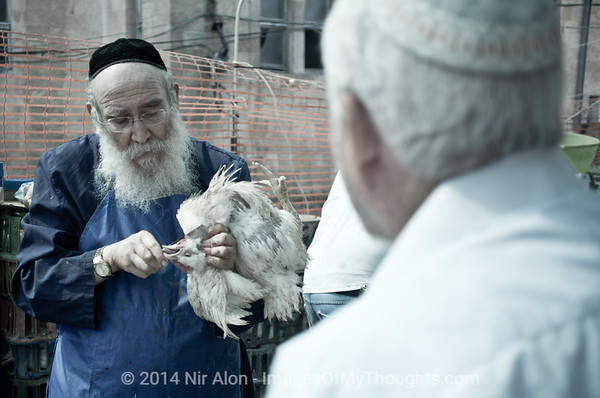 "In spite of protest from animal welfare organisations and even some parts of the Haredi community, traditional butcher, ""Shochet"" Deutsch, preserves the ancient ritual of ""Kapparot"" just a few days before Yom Kippur. Jerusalem, Israel. 03/10/2011."