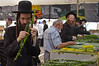 """A religious Jew uses a ruler to meausre the length of a hadas as he prepares to purchase """"the four species"""",  as ordered in Leviticus 23:40, just before the Sukkot holiday. Jeruaslem, Israel. 11/10/2011."""