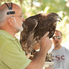 Peter Reshetniak, director of the Raptor Education Foundation, speaks about the golden eagle during centennial homecoming activities on Chadron State College's Dean's Green on Saturday, Oct. 1. The Brighton, Colo., organization brought two eagles, one golden and one bald, to the campus for demonstrations during the weekend. (Photo by Justin Haag)