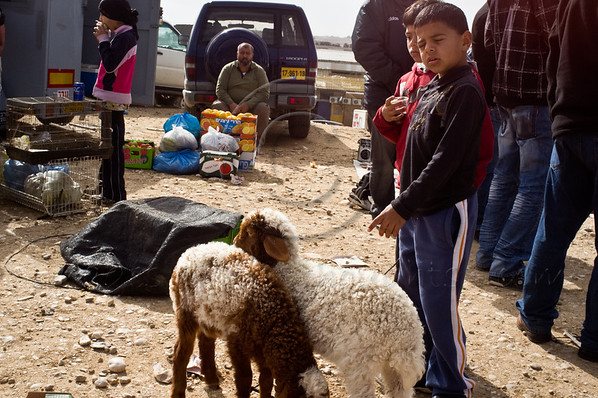 Bedouin children tend to fowl and livestock as Bedouins and others congregate for Bedouin Market Day, a long tradition that has positioned Beersheba as the central place of commerce for the Negev Desert. Beersheba, Israel. 26th January 2012.