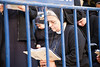 Nuns in prayer behind police barricades near the Holy Sepulchre Church. Jerusalem, Israel. 6-Apr-2012.