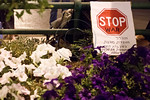 A Stop War signs lays in a flower bed during an anti-war demonstration at Paris Square. Organizers prepared more signs than the mere two dozen protesters could carry. Jerusalem, Israel. 30-A ...