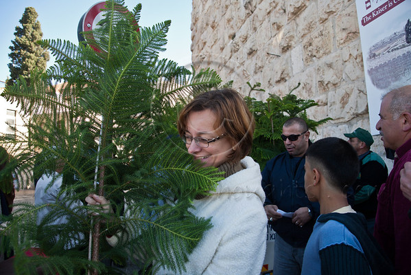 A smiling woman walks off with an Arizona Cypress Christmas tree from a distribution site at the Jaffa Gate. Jerusalem, Israel. 23-Dec-2012.<br /> <br /> The Keren Kayemeth LeIsrael - Jewish National Fund, and the Jerusalem Municipality, assisted by Issa dressed as Santa Claus, distribute specially grown Arizona Cypress trees as Christmas trees to the Christian population at the Jaffa Gate.