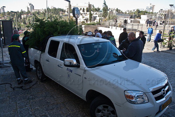 Municipal employees distribute Christmas trees from the back of a pickup truck at the Jaffa Gate. Jerusalem, Israel. 23-Dec-2012.<br /> <br /> The Keren Kayemeth LeIsrael - Jewish National Fund, and the Jerusalem Municipality, assisted by Issa dressed as Santa Claus, distribute specially grown Arizona Cypress trees as Christmas trees to the Christian population at the Jaffa Gate.