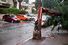 A tree broken by extreme winds lands on a pedestrian sidewalk as a strong winter storm hits Jerusalem. In this incident no injuries were reported as opposed to others, nationwide, in which pedestrians were indeed injured. Jerusalem, Israel. 7-Jan-2012.<br /> <br /> An extreme winter storm raging nationwide in Israel brings heavy rainfall and strong winds causing flooding, felled tree, power outages and traffic jams nationwide. Possible snowfall is forecasted in Jerusalem over the next few days.