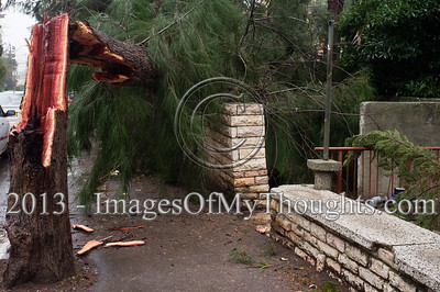 A tree broken by extreme winds lands on a pedestrian sidewalk as a strong winter storm hits Jerusalem. In this incident no injuries were reported as opposed to others, nationwide, in which pedestrians were indeed injured. Jerusalem, Israel. 7-Jan-2012.  An extreme winter storm raging nationwide in Israel brings heavy rainfall and strong winds causing flooding, felled tree, power outages and traffic jams nationwide. Possible snowfall is forecasted in Jerusalem over the next few days.