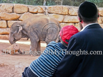 Jerusalem Biblical Zoo Celebrates Twenty
