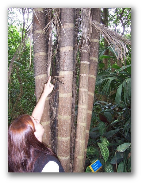 A student points toward a sloth in a tree while visiting INBioParque in San Jose, Costa Rica, in 2006. The popular ecological park will be included in the 2015 CSC trip.
