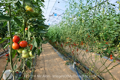 Israel: Agriculture in the Negev Desert