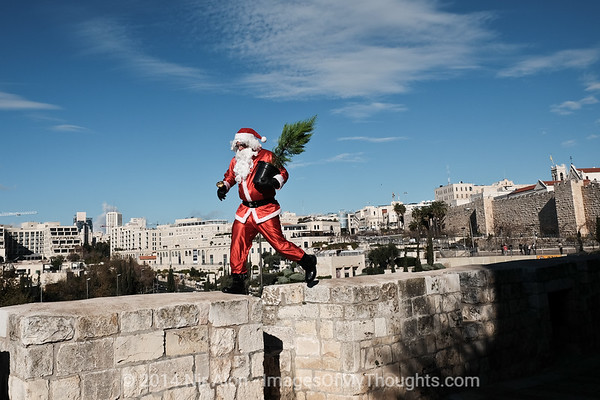 2014 Christmas Tree Distribution in Jerusalem