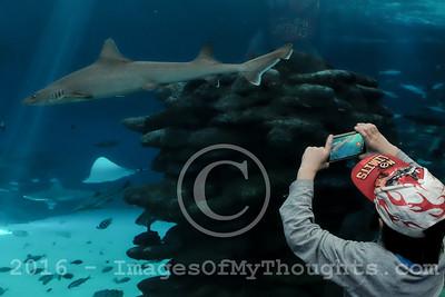 Underwater Observatory Marine Park in Eilat, Israel