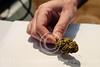 Medical Cannabis in Israel