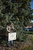 Chadron State College horticulturist Lucinda Mays places a sign on the Deans Green next to the Nebraska State Champion Black Hills (or white) spruce. (Photo by Tena L. Cook/Chadron State College)