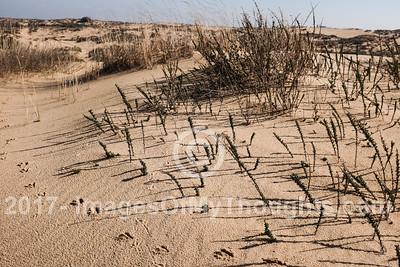 Environmental Challenges in Ashdod, Israel