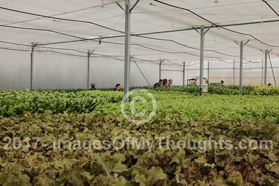 Kaima Organic Farm in Jerusalem, Israel