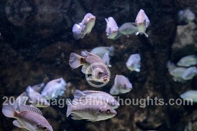 The Gottesman Family Aquarium in Jerusalem, Israel