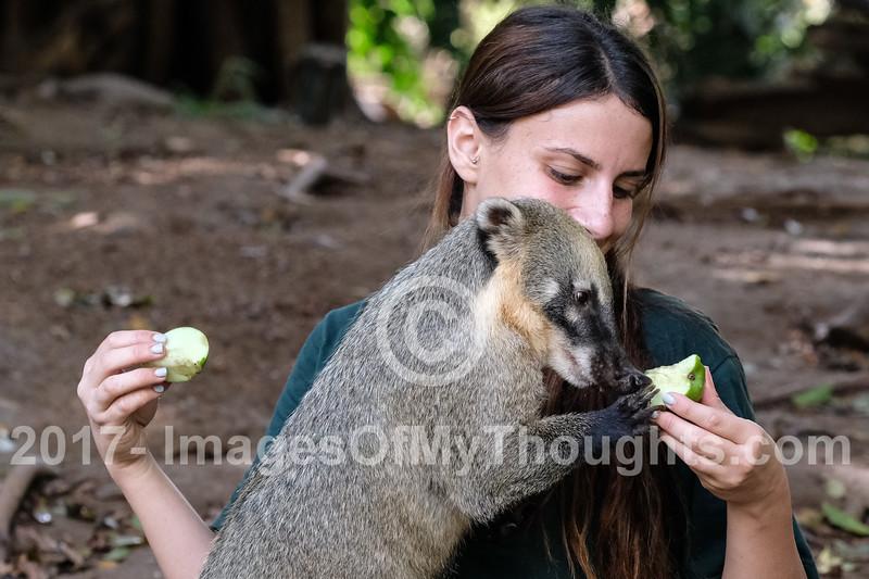 Safari Animals Prepare for Rosh Hashanah in Ramat Gan, Israel