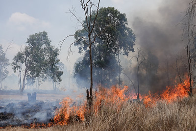 Arson Terrorism on the Gaza Border, Israel
