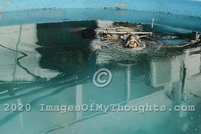 Saving Sea Turtles at Mikhmoret, Israel