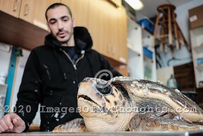 Saving Sea Turtles at Mikhmoret, Israel