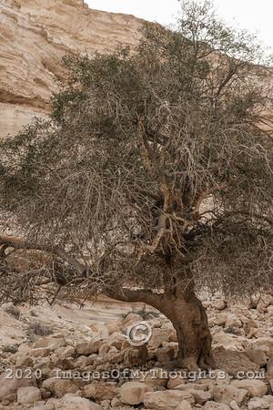Scenes of the Negev Desert
