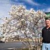 Josh Wilson, of Acme Brick, stands beside one of two fully bloomed star magnolia trees at the business on Thursday afternoon. An especially warm late winter has led to the early blooming of many plants.<br /> Globe | Laurie Sisk