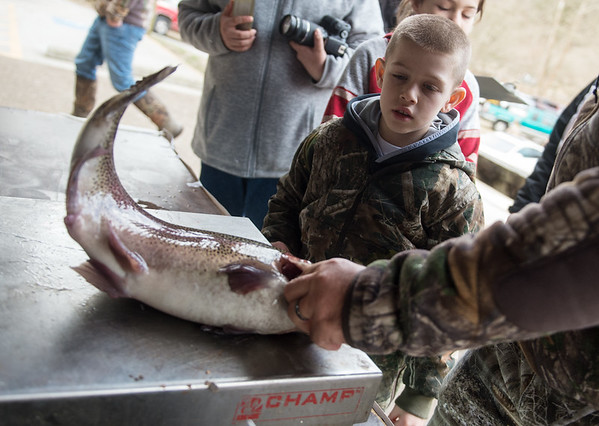 Eight-year old Colton Yockey, Cassville, watches as his fish is weighed at Roaring River State Park on Sunday. The fish wound up weighing an impressive 6.95 pounds.<br /> Globe | Roger Nomer
