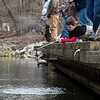 Eight-year old Keegan Horner, Diamond, pulls a fish from Roaring River during opening day at the state park on Sunday.<br /> Globe | Roger Nomer