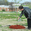 Globe/Roger Nomer<br /> Kathleen Martinous, Joplin, waters a pink dogwood tree planted in memory of her cousin SuAn Richardson at Missouri Southern, behind the Kuhn Hall Annex.  Richardson was a 40-year employee of Missouri Southern, working as one of the University's main switchboard operators.  Employees of the IT Department contributed the funds for the memorial tree.