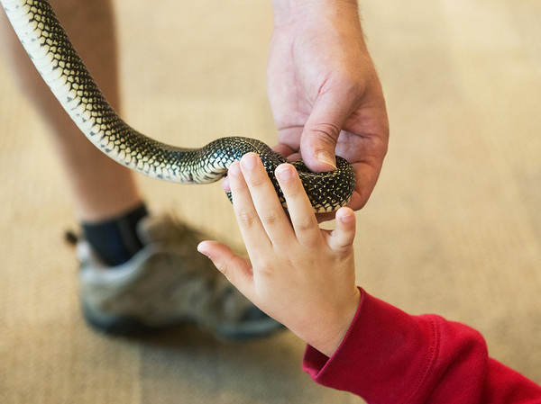 Globe/Roger Nomer<br /> Kelsey Norman first graders use their sense of touch to identify a snake on Monday at Wildcat Glades Conservation and Audubon Center.