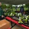 Betty Houser, of the Carl Junction Cultivators, organizes plants for sale at the annual CJ Cultivators Plant Sale on Saturday at the Carl Junction Memorial Pavillion.<br /> Globe | Laurie Sisk