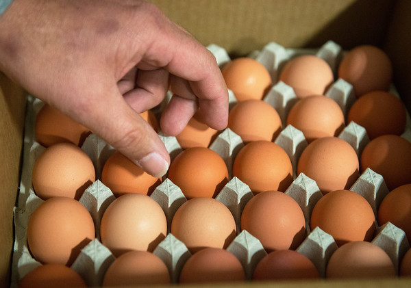 Globe/Roger Nomer<br /> Eggs like these are being donated from Opal Foods in Neosho.