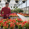 Globe/Roger Nomer<br /> Liam Clevenger, a junior at Joplin High School, waters plants on Tuesday at the Franklin Tech greenhouse. Franklin Tech's greenhouse and landscaping class is currently selling spring plants at the school into May during school hours, with special open late hours until 6:00 p.m. through Thursday. Benefits from the sale go to the Joplin FFA.