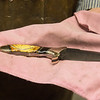 Globe/Roger Nomer<br /> Paul Brown displays one of his knives finished with mammoth ivory.