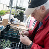 Globe/Roger Nomer<br /> Bob Mitchell, Oronogo, repots plants on Tuesday at the Crosslines greenhouse in preparation for the annual Greater Ozark Master Gardeners plant sale. The sale will take place May 6 at the Powers Museum in Carthage.