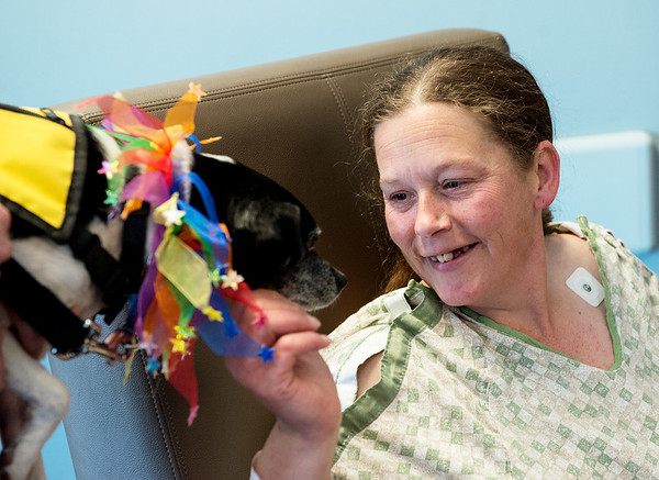 Katie Hill, Carthage, greets Penny for Natonal Therapy Animal Day at Freeman West on Monday.<br /> Globe | Roger Nomer