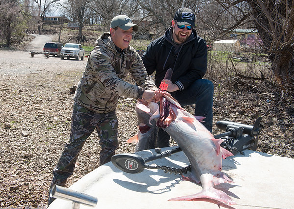 Kyle Green, left, and Jeff Hutchinson load their spoonbill catches on a boat on Wednesday in Fairland. Globe | Roger Nomer