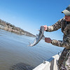 Kyle Green pulls in a catfish while filming on the Neosho River on Wednesday.<br /> Globe | Roger Nomer