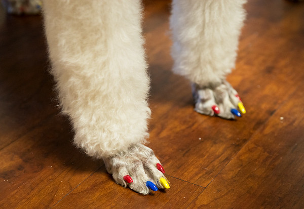Gabrielle has her nails done for Natonal Therapy Animal Day at Freeman West on Monday.<br /> Globe   Roger Nomer