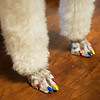 Gabrielle has her nails done for Natonal Therapy Animal Day at Freeman West on Monday.<br /> Globe | Roger Nomer