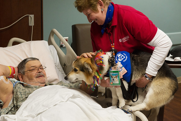 Therapy dog Gibbs and owner Sue Hicks pay a visit to Jim Damm, Carl Junction, at Freeman Hospital. On Tuesday, Freeman celebrated National Therapy Animal Day with thank you gifts for the dogs and their owners.<br /> Globe | Roger Nomer