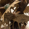 Larry Glaze has added a young eagle to his sculpture at Mercy Hospital Joplin.<br /> Globe | Roger Nomer